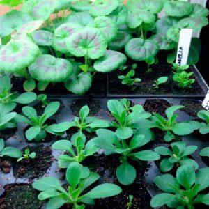 Seedlings-4.18.16
