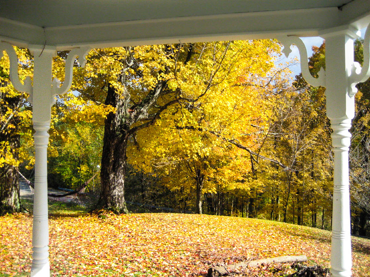 Golden Autumn from the Veranda