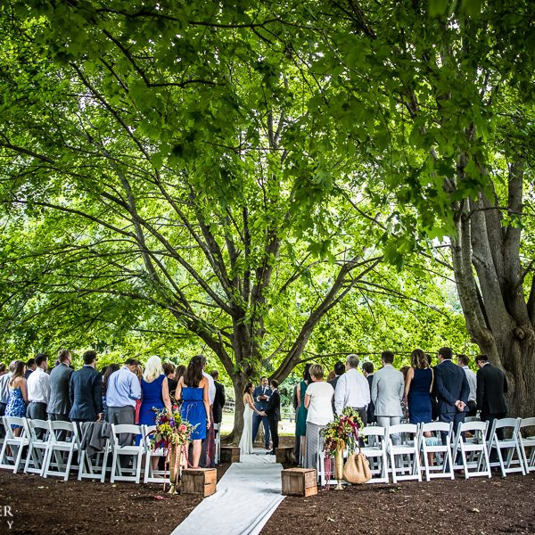 Ceremony Under the Maples